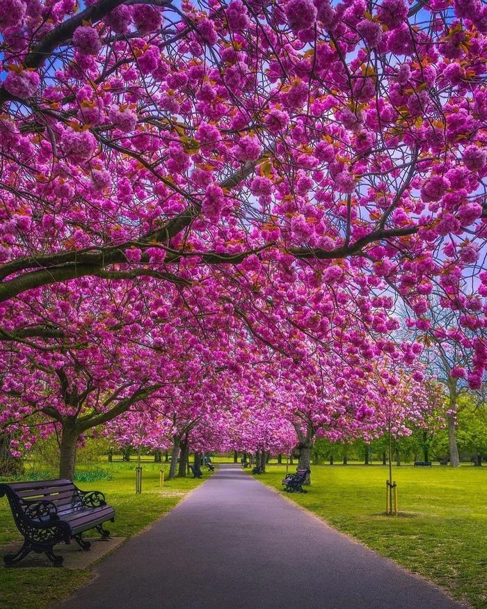 Гринвичский парк в Лондоне