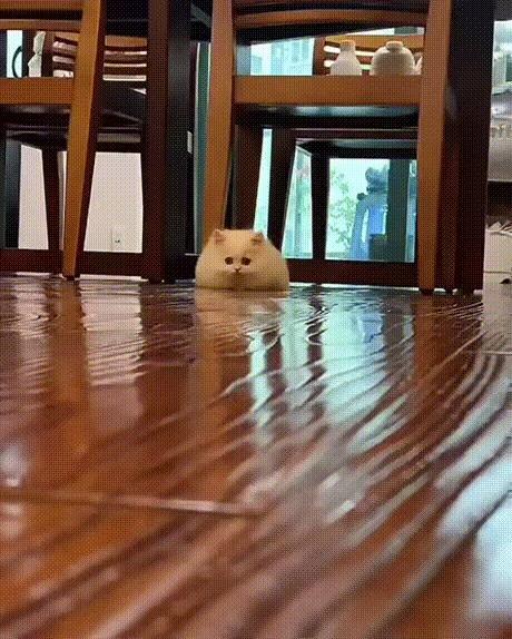 Просто котенок, листай дальше