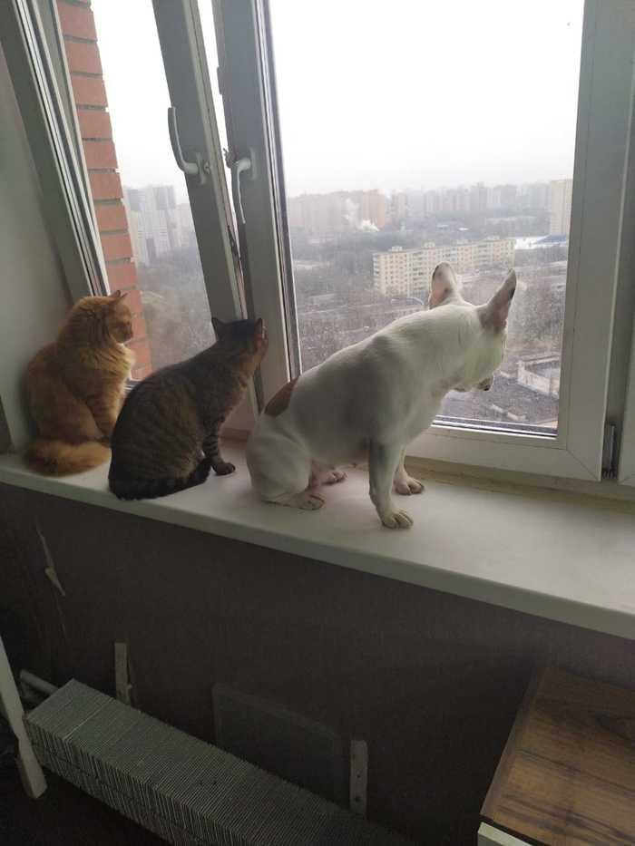 Кошки против собак? Да ну нафиг! Вместе интереснее же!