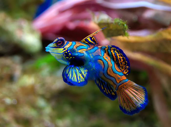 Несколько ярких рыб, поражающих своим внешним видом Животные, Рыба, Природа, Яндекс Дзен, Длиннопост