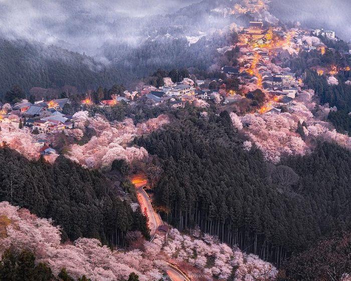 Префектура Нара, Япония Япония, Сакура, Фотография, Лес, Горы, Туман
