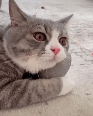 Кошачий кайф