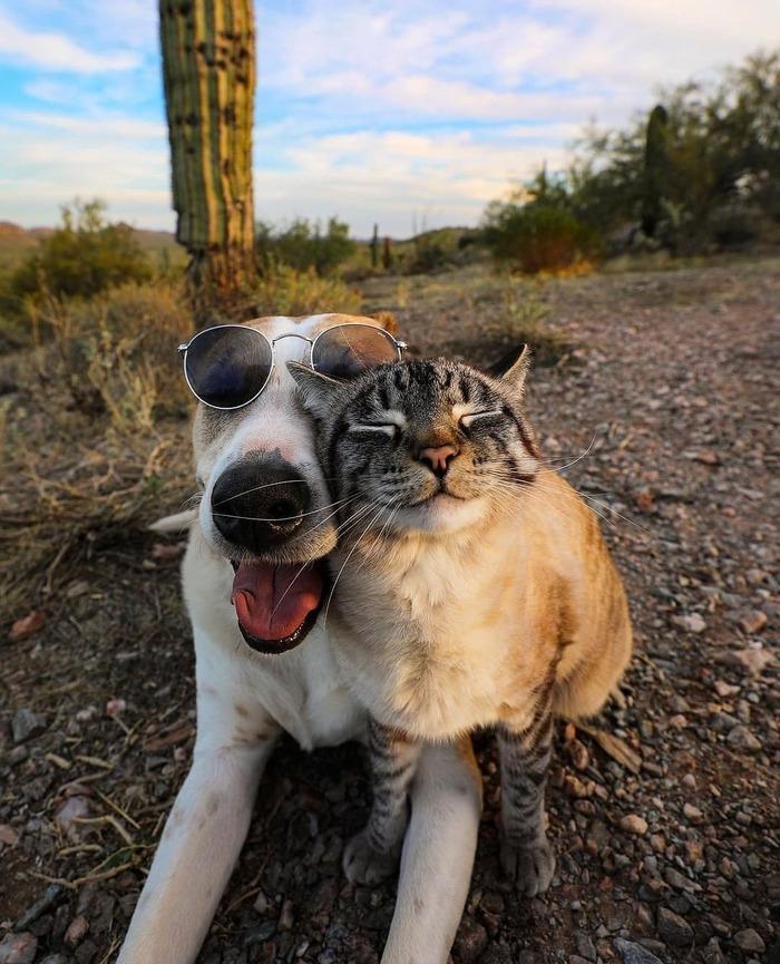 Пёс путешествует со своим котом