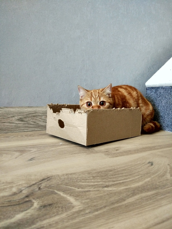 Любимый картонный домик