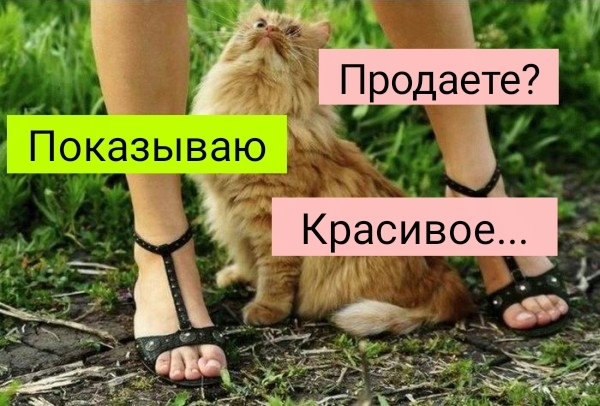 Кисов продаете?