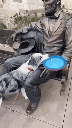 Пестрая подборка gif'ок с собаками Собака, Гифка, Разное, Длиннопост