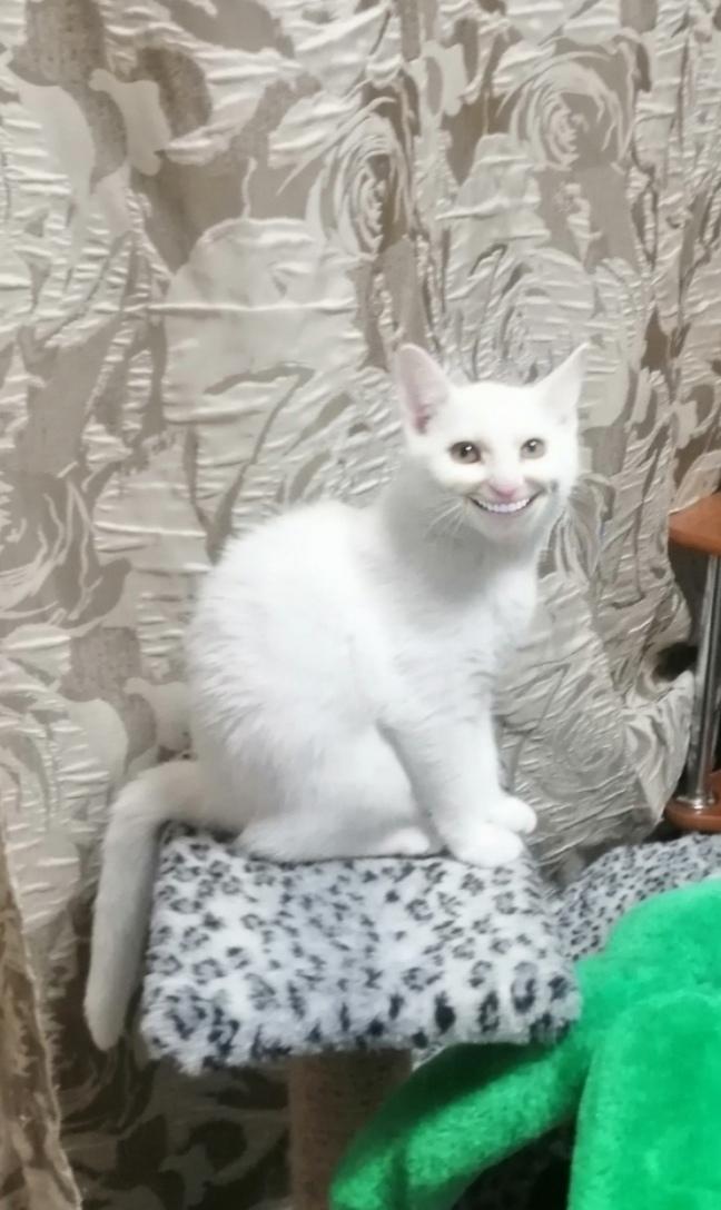 Привет, тебя под кроватью ждёт большой сюрприз