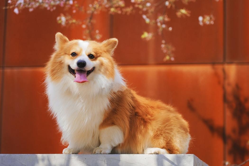 как выбрать породу щенка россия