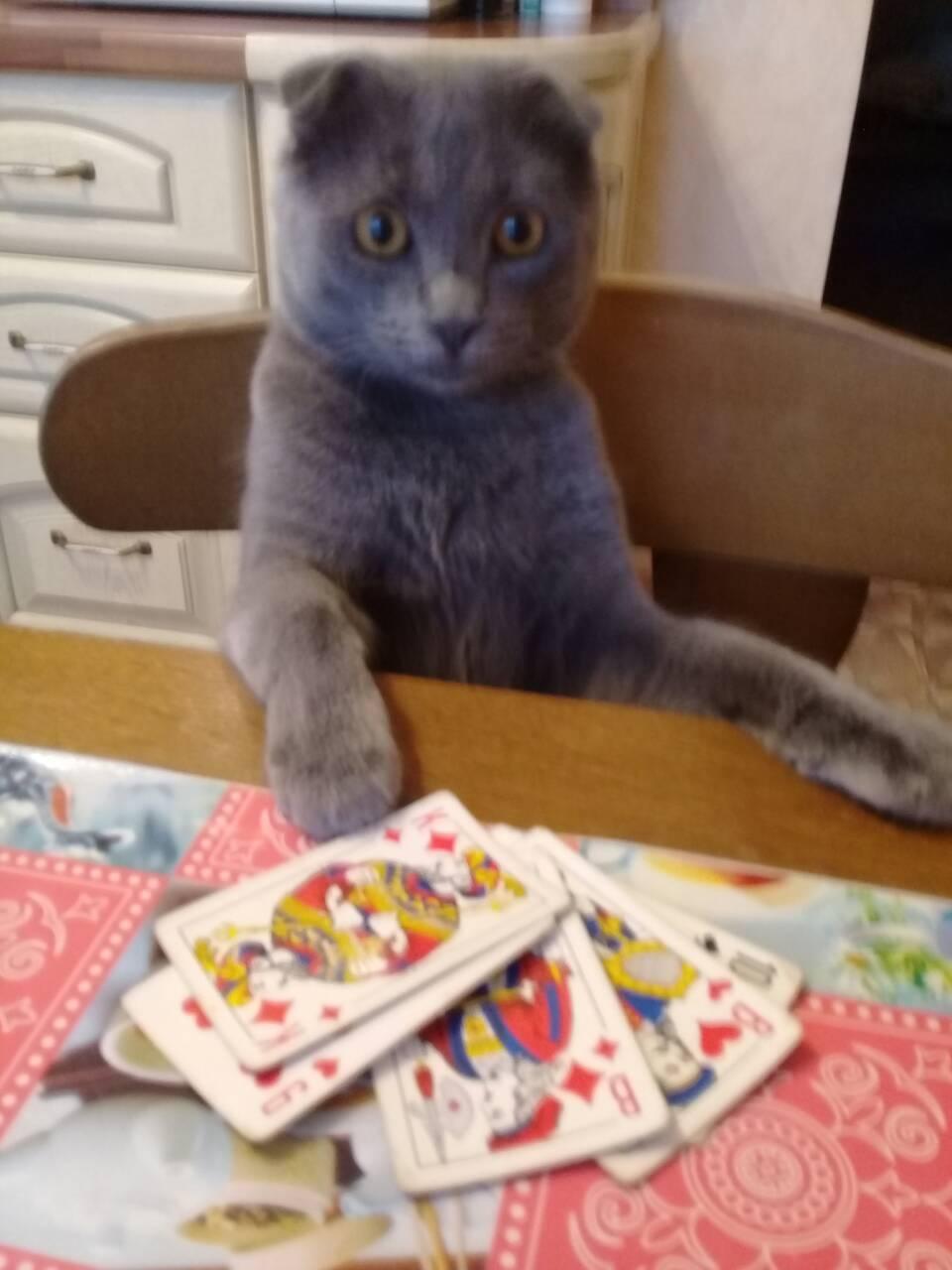 Карты кот играть чат рулетка онлайн иностранный
