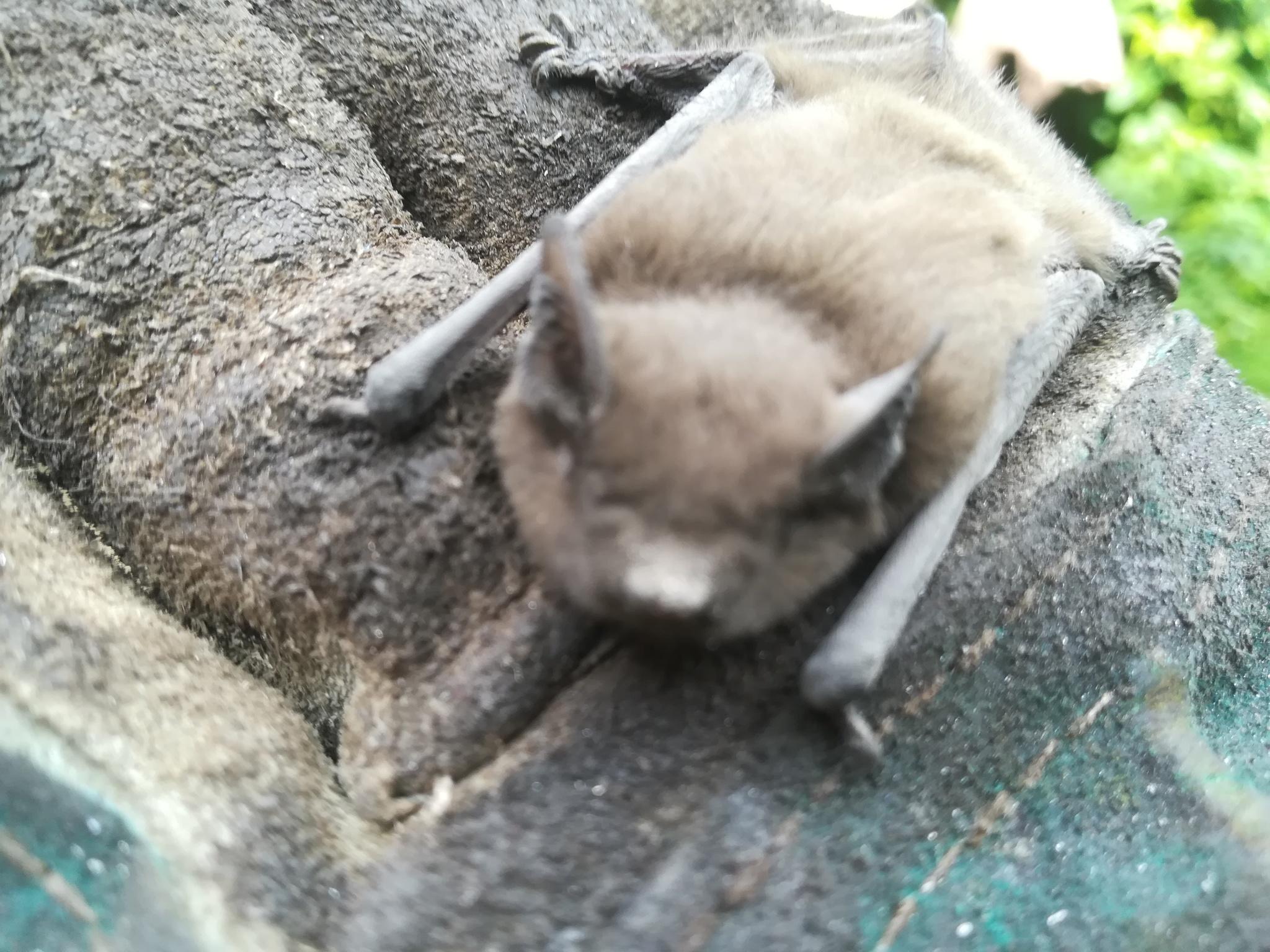 Обои кусты, крылья, летучая лисица. Лисы foto 13
