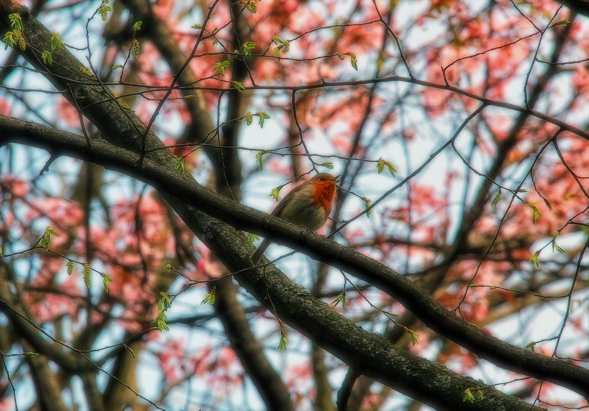 В лесу запели птицы частные клиники наркологические в рб